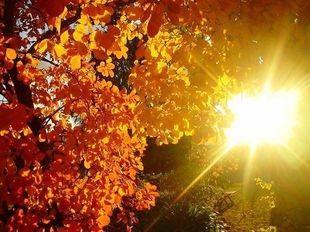 Психологическая и духовная поддержка на  ноябрь 2015 года